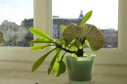 groen op vensterbank