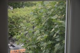 groen door het raam